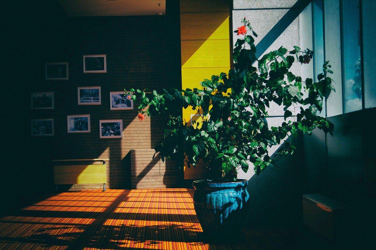 zielona ściana w salonie